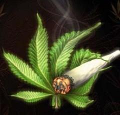 'Ik heb ooit één sigaret met marihuana gerookt en ben daardoor zo misselijk geworden dat ik nooit meer softdrugs heb aangeraakt'.