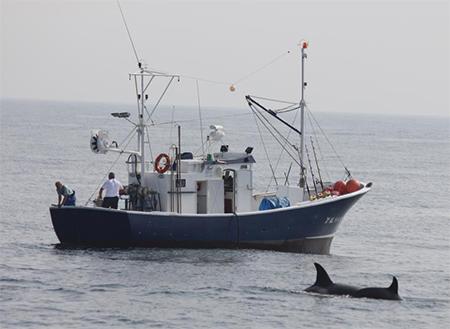 Orka's kunnen horen of er op een vissersschip een transportband voor de afvoer van visafval wordt gestart.