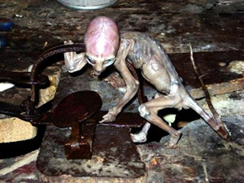 Jaja... in Peru heeft deze alien zich uit een dierenval weten te bevrijden.
