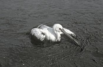 Ondanks dat het er op het eerste gezicht voor de vogel vaak dramatisch uit lijkt te zien, is de ziekte goed te behandelen.