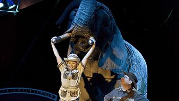 Buba, de Afrikaanse olifant van het circus Freiwald is gelukkig weer terug bij het circus. Foto: Freiwald